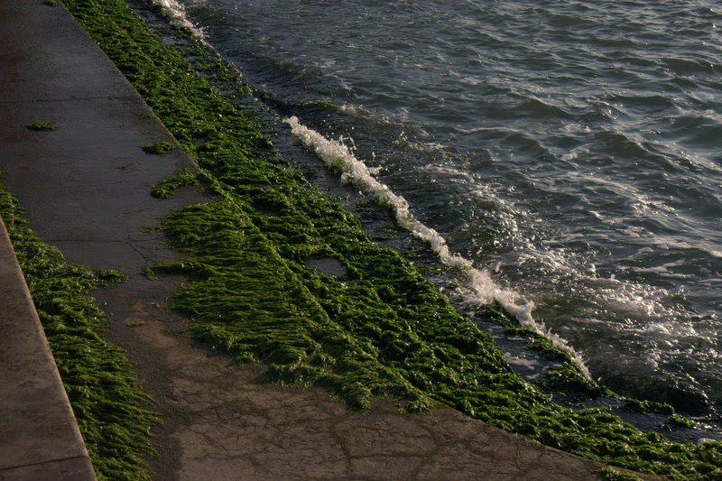 sea weeds